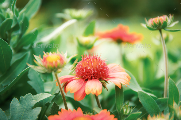 Orange flowers of blooming in winter - Stock Photo - Images