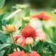 Orange flowers of blooming in winter - PhotoDune Item for Sale