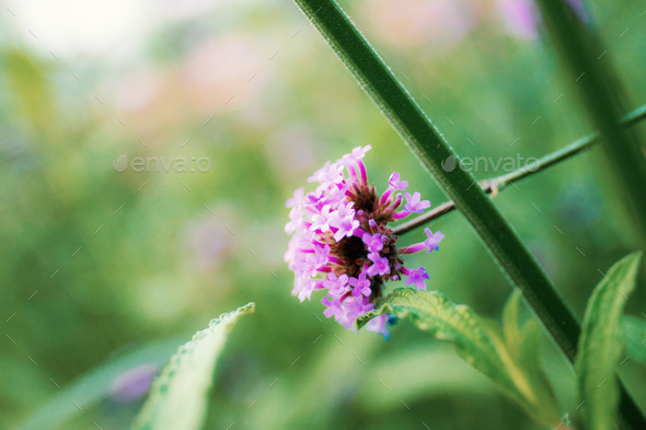 Purple flowers head in nature - Stock Photo - Images