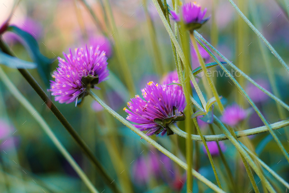 Purple flowers in park - Stock Photo - Images
