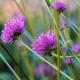 Purple flowers in park - PhotoDune Item for Sale