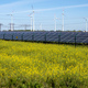 Flowering canola field with alternative energy production - PhotoDune Item for Sale