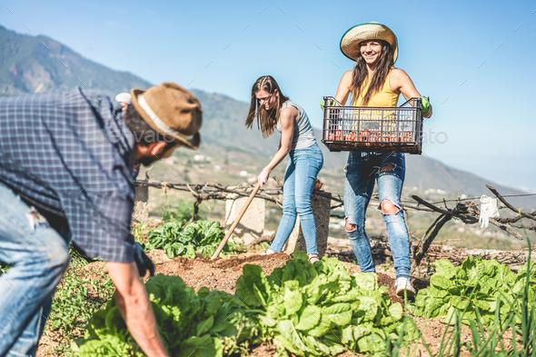 Teamwork harvesting fresh vegetables in the community greenhouse garden - Stock Photo - Images