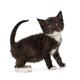 Funny, black kitten - PhotoDune Item for Sale