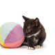 Small black kitten playing with a ball - PhotoDune Item for Sale