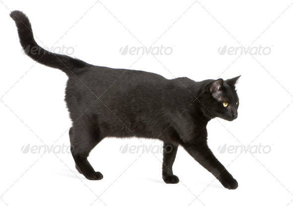 Black cat - Stock Photo - Images