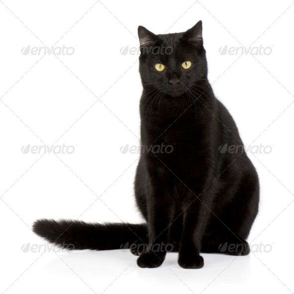 Black cat - Stock Photo - Images
