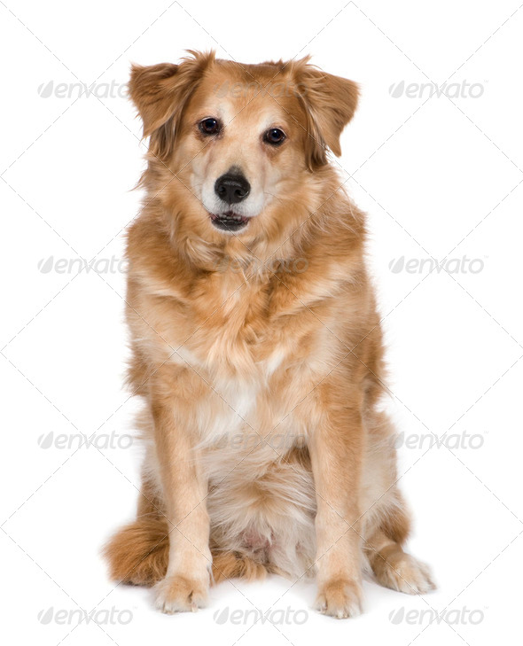 Bastard (12 years) - Stock Photo - Images