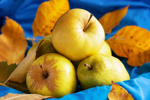 Harvest of pears and apples on blue fabric surrounded by autumn leaves - Stock Photo - Images