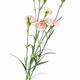 carnation flower isolated on white - PhotoDune Item for Sale