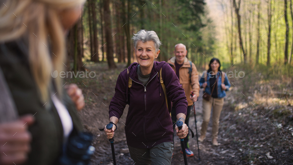 Group of seniors hikers outdoors in forest in nature, walking - Stock Photo - Images