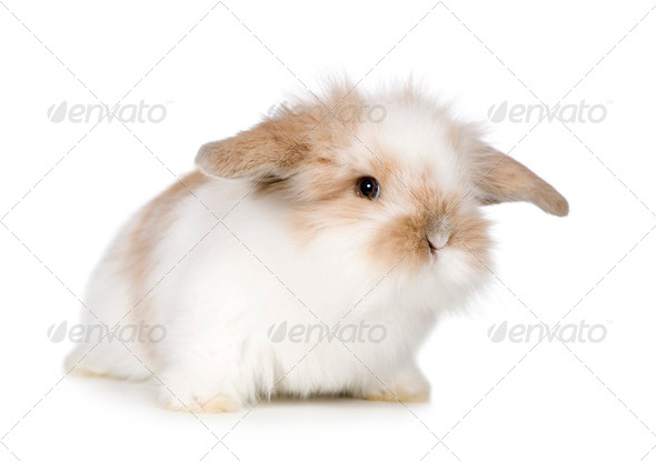 Young Rabbit - Stock Photo - Images