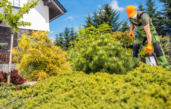 Fungicide and Insecticide Job Inside Backyard Garden - Stock Photo - Images