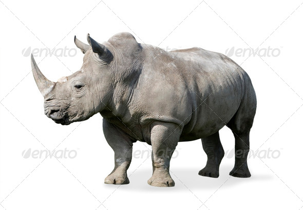 Rhinoceros - Stock Photo - Images