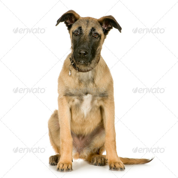 Bastard (6 months) - Stock Photo - Images