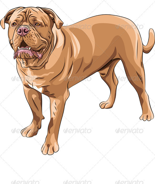 Vector  Dog Breed French Mastiff - Animals Characters