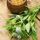 Fenugreek seeds and leaves - PhotoDune Item for Sale