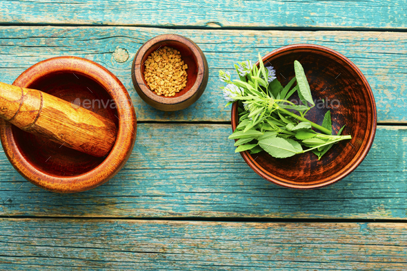 Fenugreek seeds and leaves - Stock Photo - Images