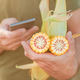 Farmer holding corn on the cob and using smart phone in field - PhotoDune Item for Sale