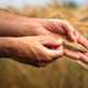 Agronomist farmer examining ripe barley crops in field - PhotoDune Item for Sale