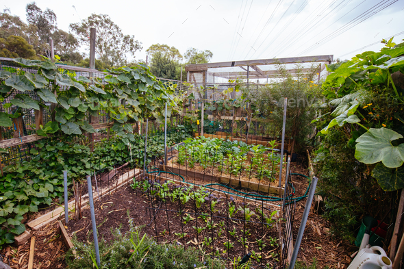 Urban Garden Plot in Australia - Stock Photo - Images