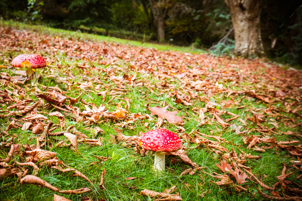 Pirianda Gardens in Victoria Australia - Stock Photo - Images