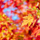 Autumn Leaves in Warburton Australia - PhotoDune Item for Sale