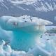 Arctic terns, Sterna paradisaea, resting on iceberg at Jokulsarlon glacier lake in Iceland - PhotoDune Item for Sale