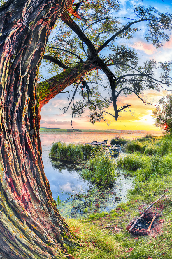 Colorful and vibrant landscape of lake shore with reeds. - Stock Photo - Images