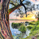 Colorful and vibrant landscape of lake shore with reeds. - PhotoDune Item for Sale