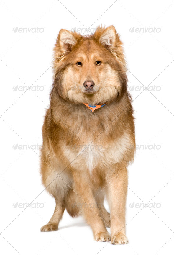 Bastard (9 months) - Stock Photo - Images