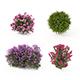 Realistic Shrub Bush Flower Set