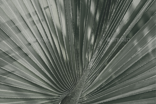 Close up of fan palm leaf textured background - Stock Photo - Images