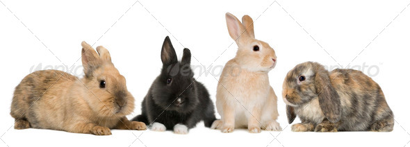 Bunny rabbits sitting in front of white background, studio shot - Stock Photo - Images