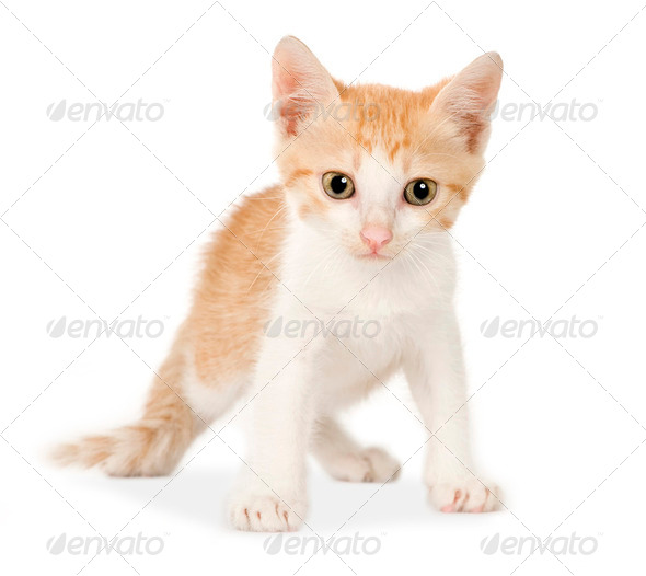 Kitten - Stock Photo - Images