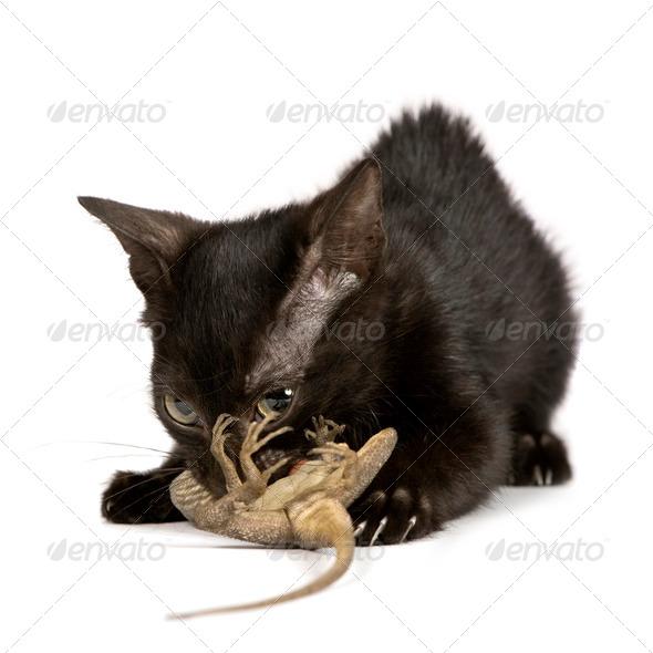 Wild Kitten - Stock Photo - Images