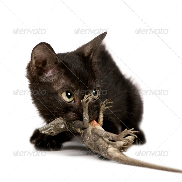 Wild Kitten - Stock Photo - Images