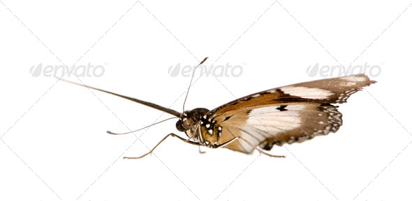 Butterfly - Stock Photo - Images