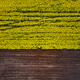 Bird's eye view from a drone of a passing canola crop - PhotoDune Item for Sale