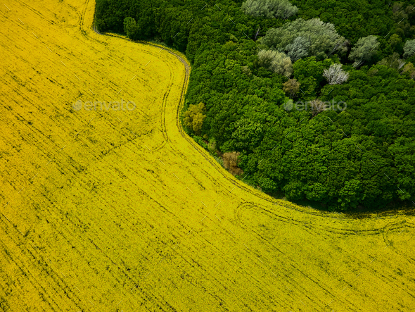 Bird's eye view from a drone of a passing canola crop - Stock Photo - Images