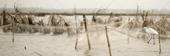 Bird standing on fishing nets - Stock Photo - Images