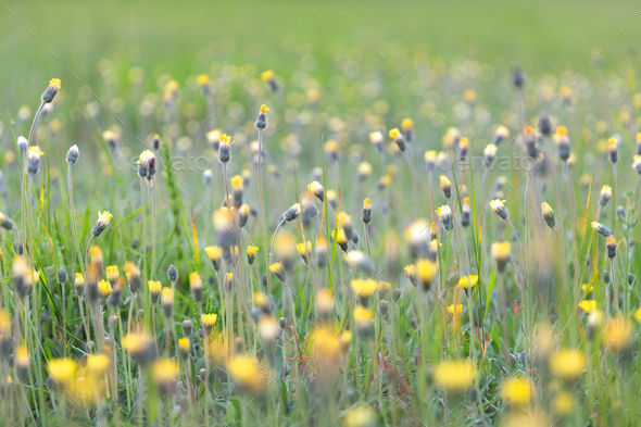 Colorful spring meadow - Stock Photo - Images