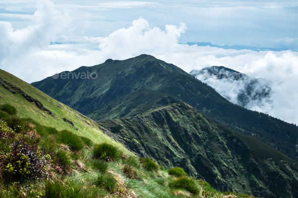 Lush green grass covered mountains meadow - Stock Photo - Images