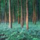 Young oak stree seedlings in oak forest - PhotoDune Item for Sale