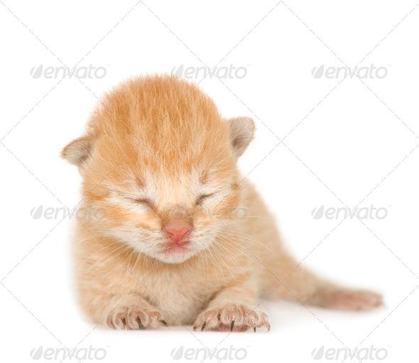 Kitten - Stock Photo - Images