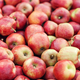 Organic fruit market, shop sale, agricultural business and eco farm - PhotoDune Item for Sale