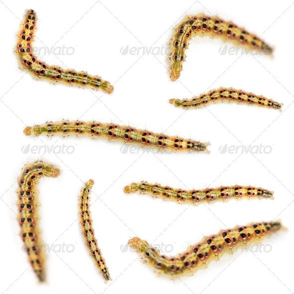 Caterpillar - Stock Photo - Images