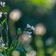 Flowers in garden - PhotoDune Item for Sale