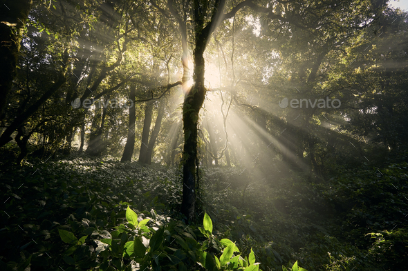 Sun shining through trees in tropical rainforest - Stock Photo - Images