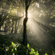 Sun shining through trees in tropical rainforest - PhotoDune Item for Sale
